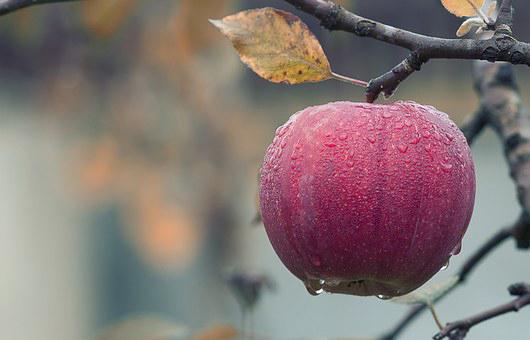 apple-1122537__340